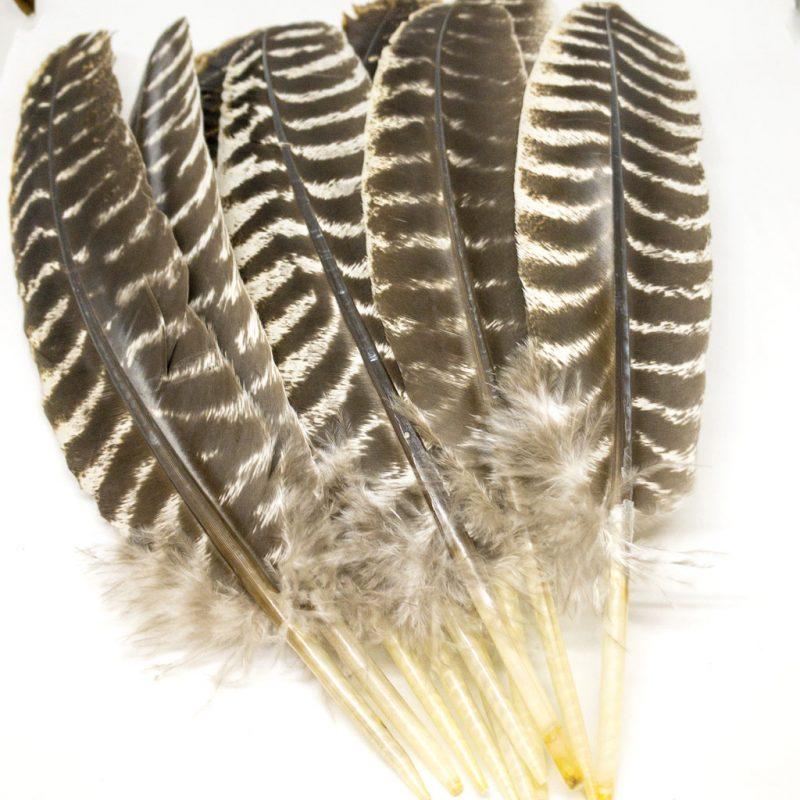 Räucherfedern Federn Truthahn braun gestreift Produktbild TalaNia Räucherwelt