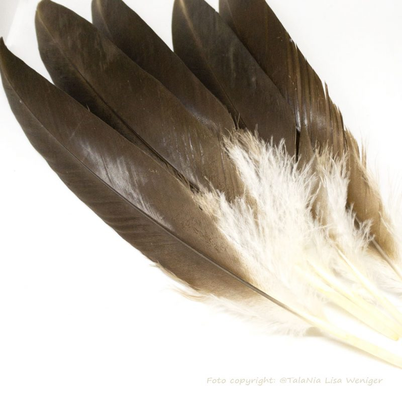 Räucherfedern Federn Truthahn dunkelbraun Produktbild TalaNia Räucherwelt